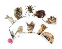 Коврик для мыши Defender Шелковый 230х190х1мм, шелк, натуральная резина, ассорти 10 видов, нескользящее покрытие