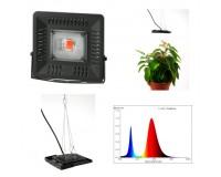 Светильник FITO прожектор для растений Эра FITO-50W-LED BLUERED 50 75 IP65, 1370 K